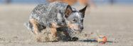Chaotenhunde-Fotografie